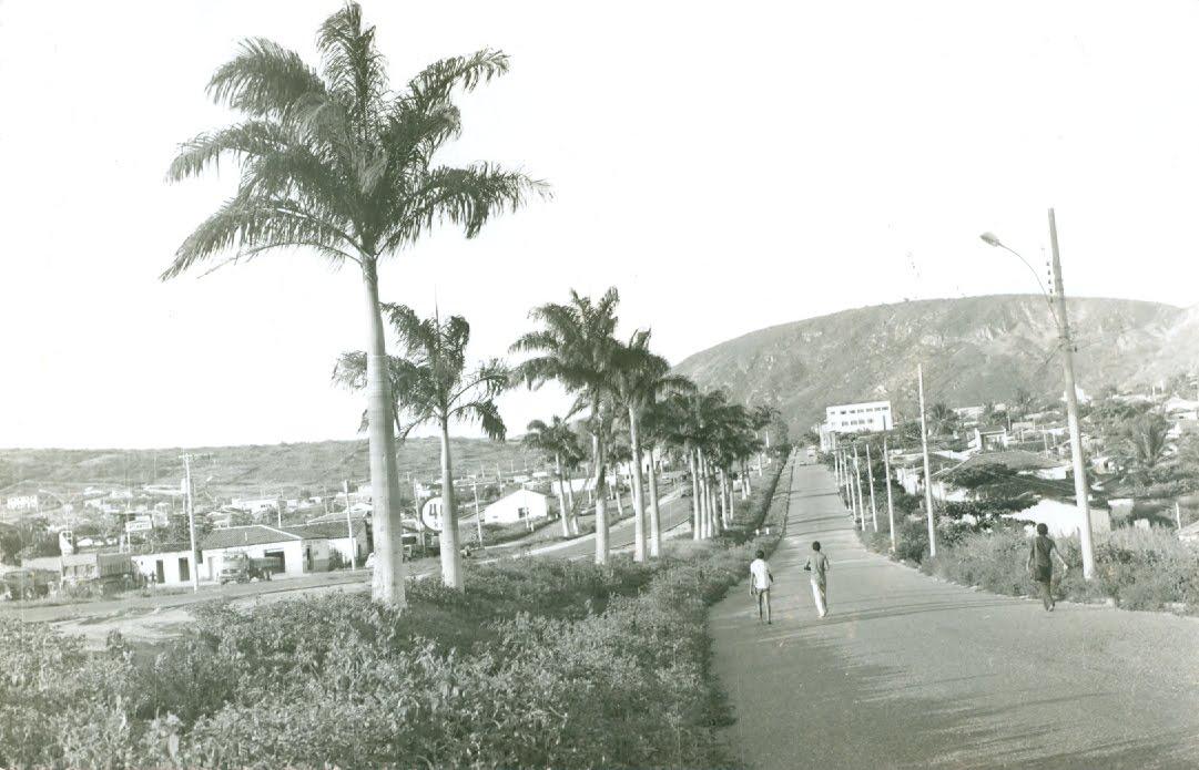 As palmeiras comunistas de Itaobim
