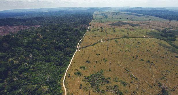 Foto19 Floresta Amazonica  Imigrantes poderão opinar sobre os efeitos no clima do Brasil