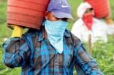 Risco de falta de mão-de-obra faz fazendeiros apoiarem imigração