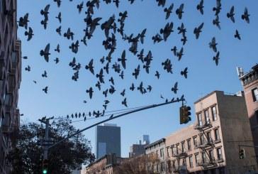 Fotógrafo brasileiro publicará livro com as aves de Nova York