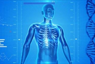 Células-tronco, cabeça e membros