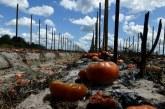 Combate de Trump aos indocumentados compromete colheitas nos EUA