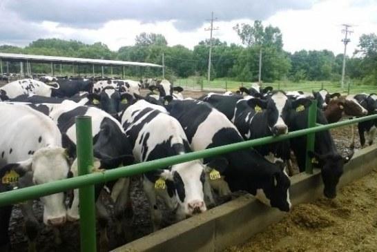 Produtora de leite assume empregar mais de 100 indocumentados