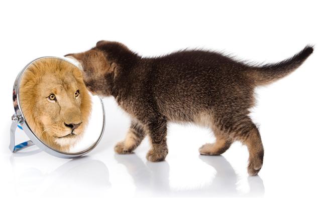 leao gato Faça do espelho seu melhor amigo