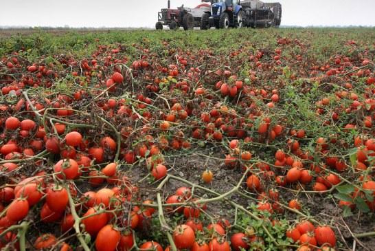 Colheitas apodrecem nos campos após mudança migratória na Inglaterra