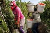 Política anti-imigrante causa falta de mão-de-obra e revolta fazendeiros