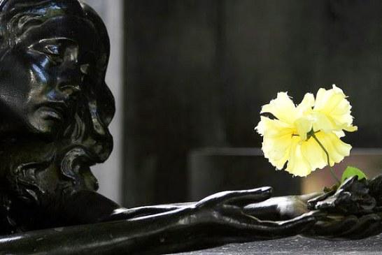 Flor do lácio