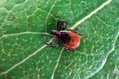 Casos de doença de Lyme disparam em NJ