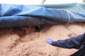 Patrulheiros descobrem imigrante escondido em carga de serragem