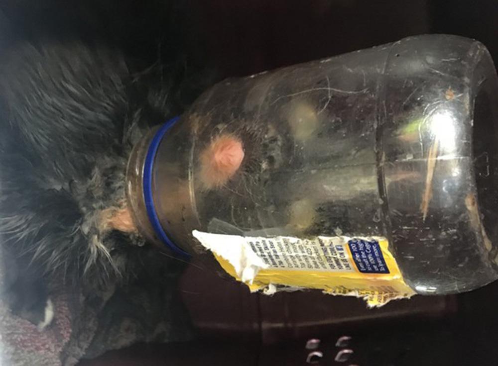 """Foto5 Gato Hellmans NJ: Gato é batizado de """"Hellman's"""" por cabeça presa em jarro"""