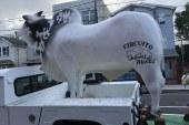 """Delícias de Minas compra """"boi"""" para o maior rodeio em Newark"""