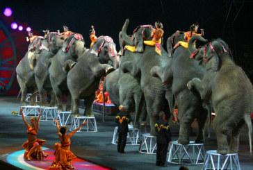New Jersey quer proibir elefantes em circos
