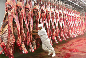 Trump frustra Bolsonaro e mantém veto à carne bovina do Brasil