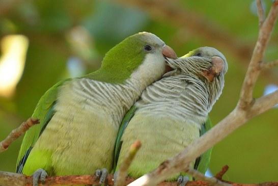 """Papagaios fugitivos há mais de 30 anos fazem New Jersey de """"lar"""""""