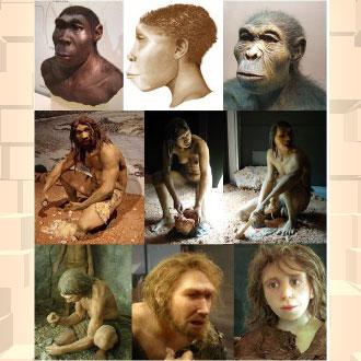 Evolução do homem – A errata